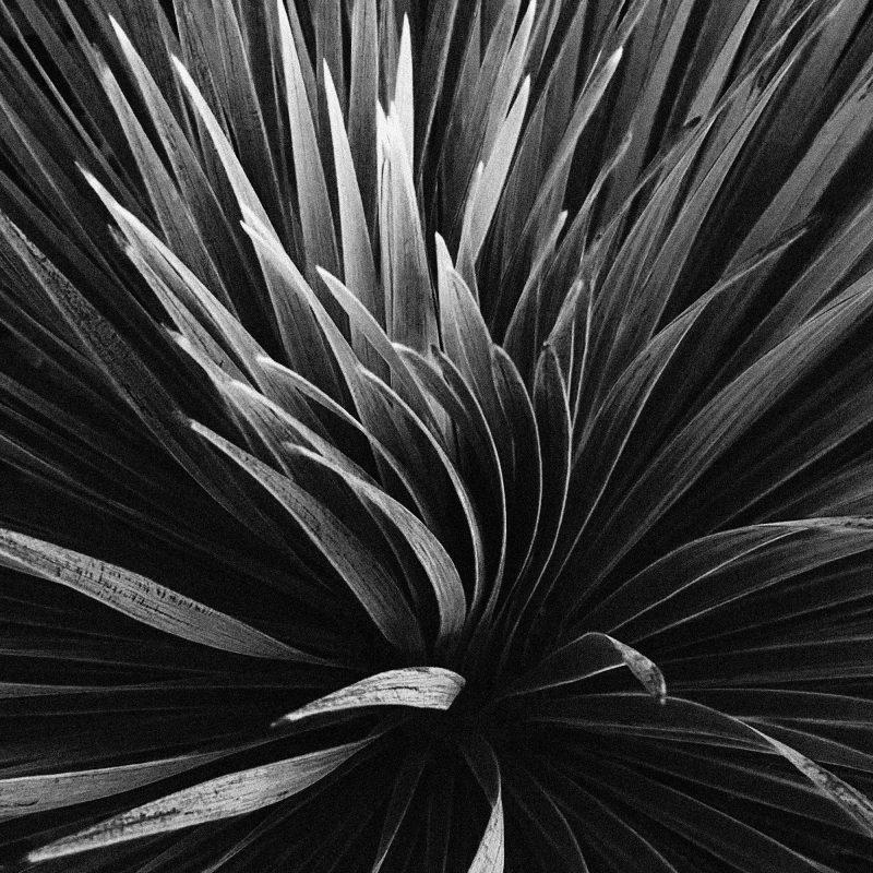 Palmstudie - Studio Caro-lines