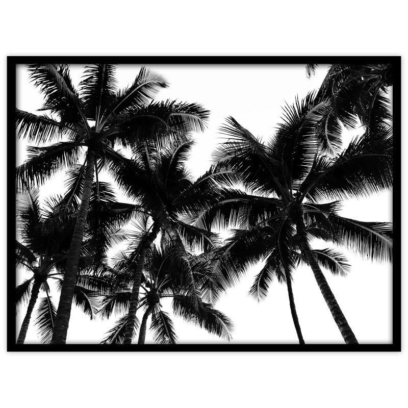 Palmer på Hawaii - Studio Caro-lines