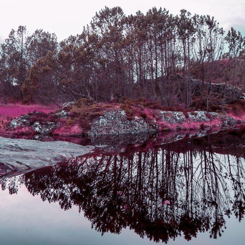 Pink lake - Studio Caro-lines