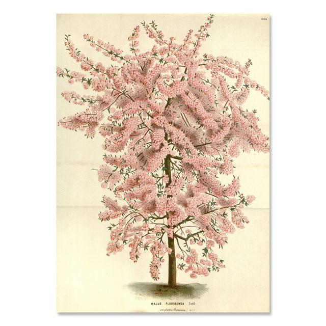 Rosa träd med massa blommor