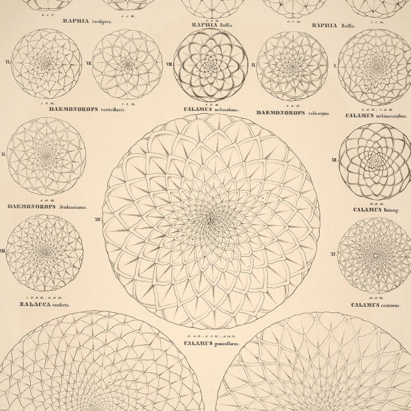 Struktur hos en pion