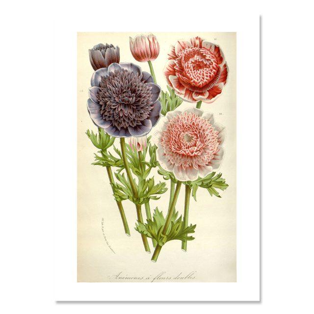 En bukett blommor rosa, lila och cerise