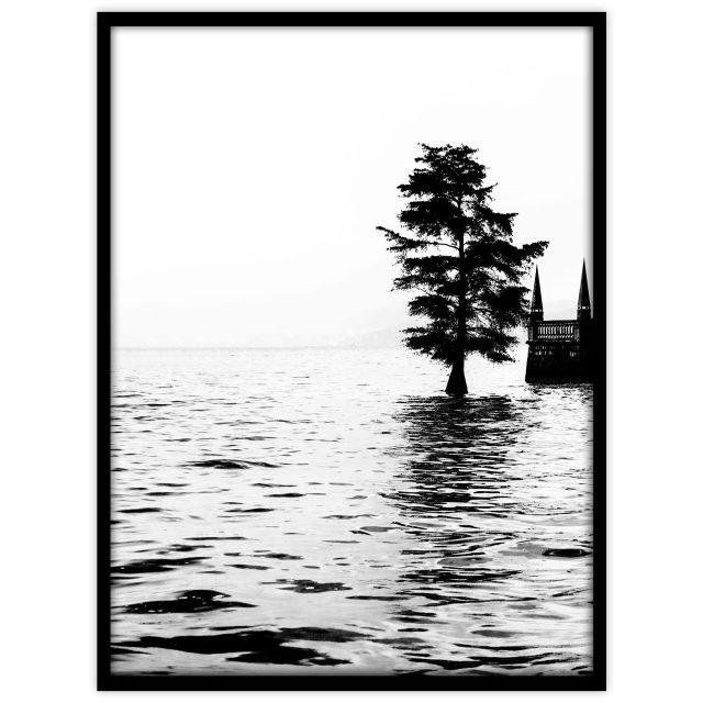 Träd i Maggiore-sjön - Studio Caro-lines