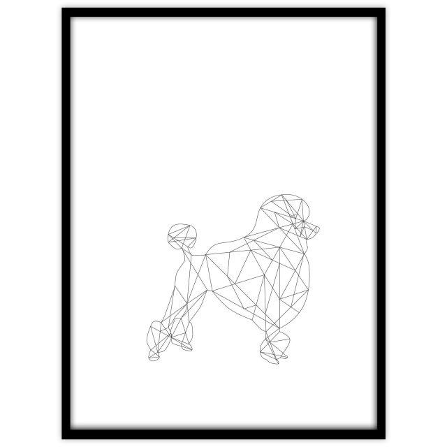 Pudel (vit) - Studio Caro-lines
