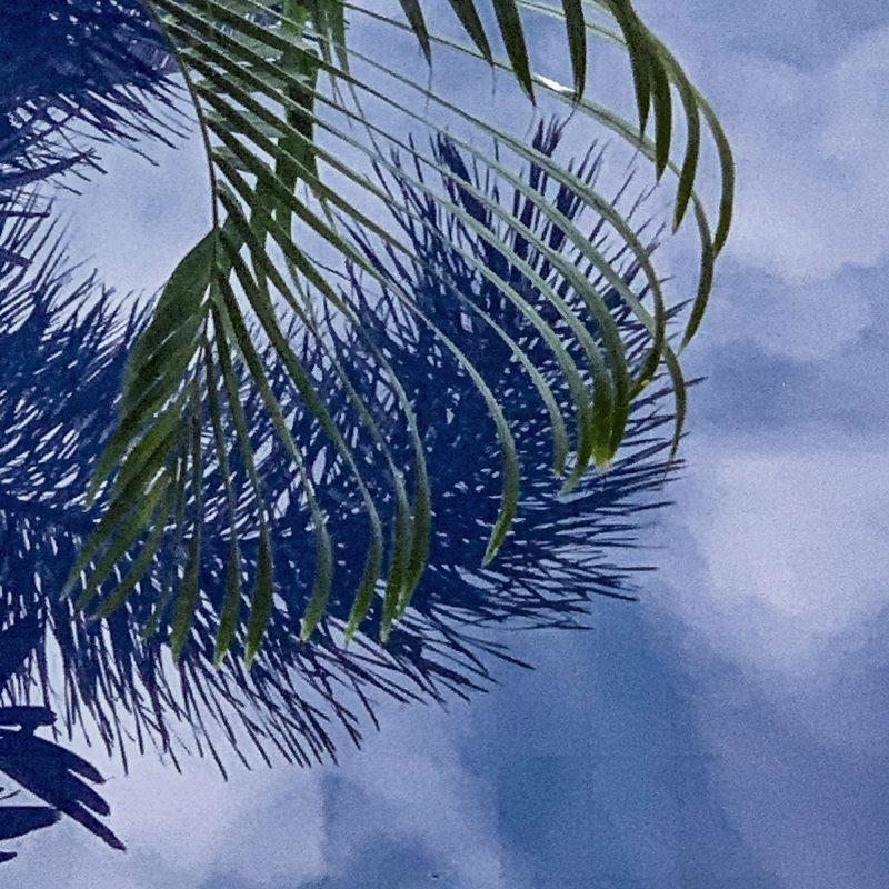 Poster med ett fotografi av palmblad som reflekterar sig i vattnet på en pool