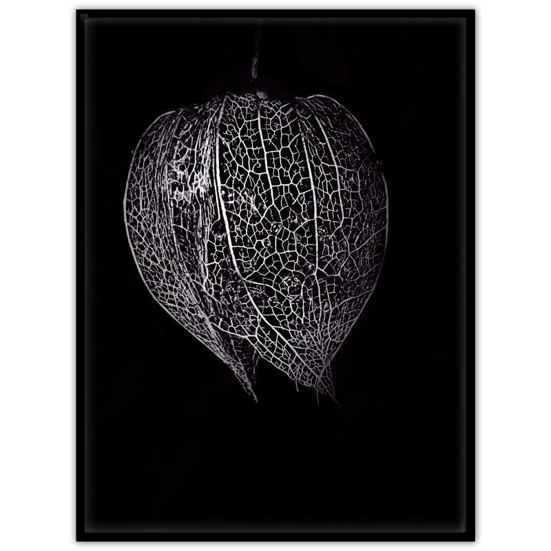 Poster med ett physalis / kapkrusbär / gyllenbär