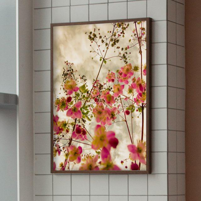 poster med rosa blommor |fotografi