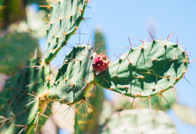 Cactus Warung Agung Mangrove Forest Nusa Lembongan