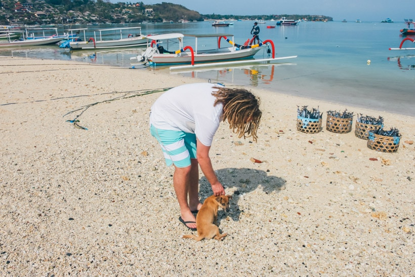 Dog and surfer at the beach Nusa Lembongan