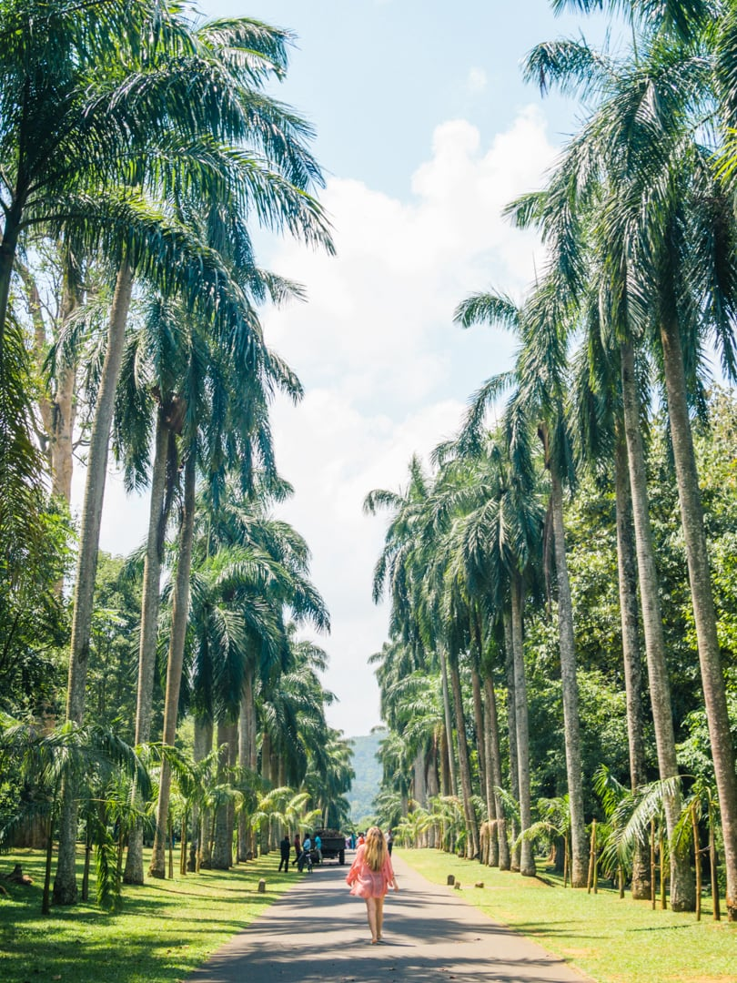 All the best places to see in Kandy, Sri Lanka - The Royal Botanical Gardens Palm Tree Avenue