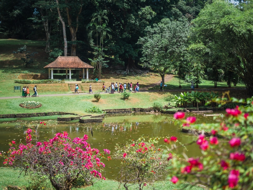 All the best places to see in Kandy, Sri Lanka - The Royal Botanical Gardens Peradeniya