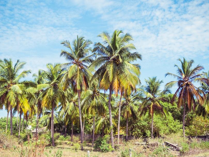 Top 10 best things to do in Arugam Bay, Sri Lanka