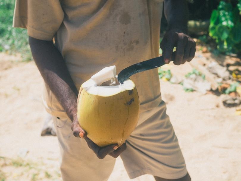 Dalawella beach right next to Unawatuna, Sri Lanka - Fresh Coconut