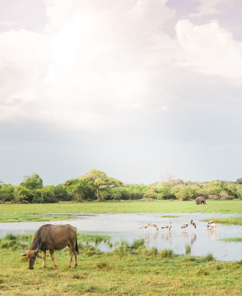 Top 10 best things to do in Arugam Bay, Sri Lanka - Safari