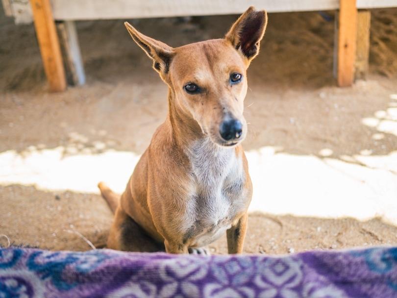 Dog Care Clinic, Mihiripenna / Talpe, Sri Lanka