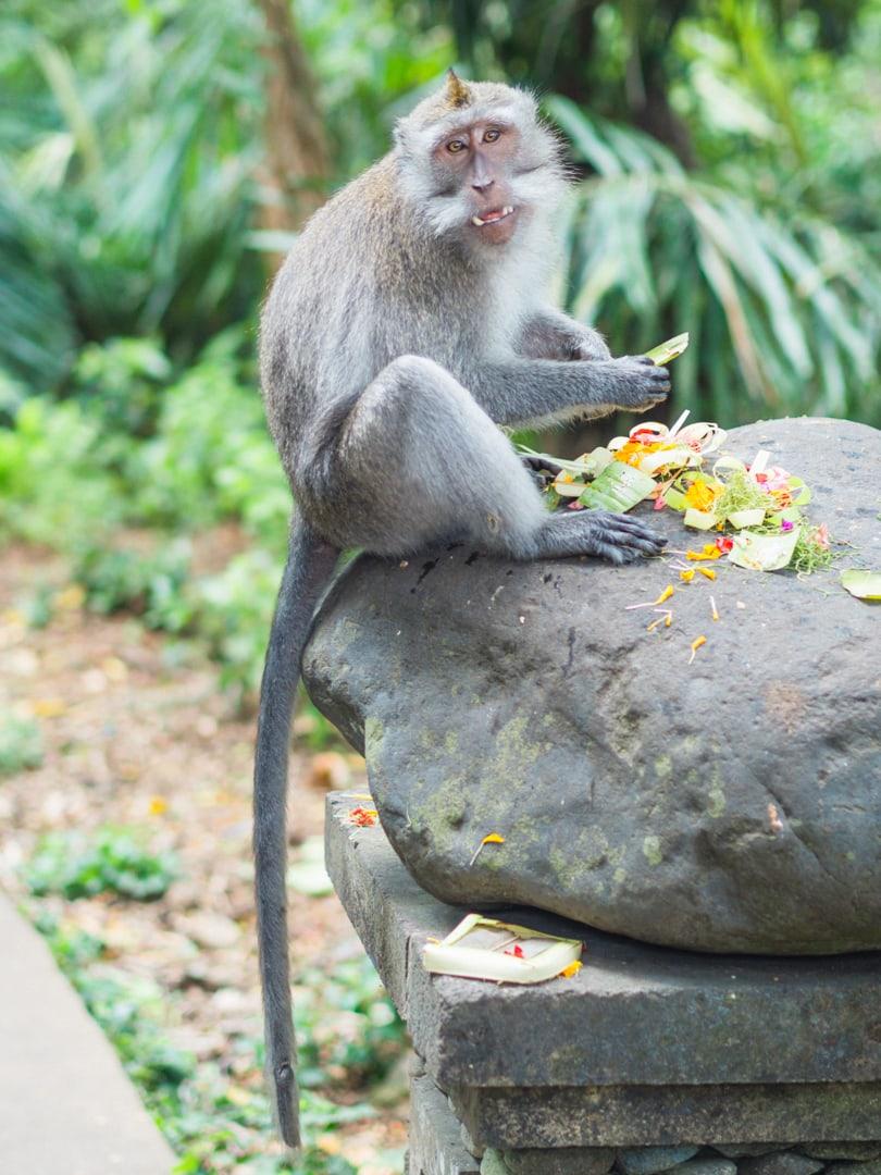 Ubud Sacred Monkey Forest - Bali