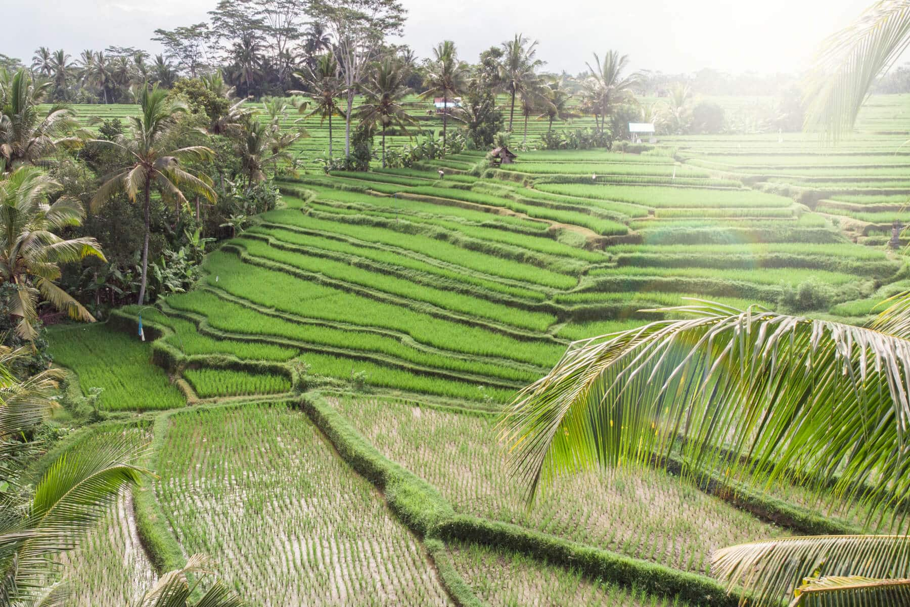 8 unique & affordable Bali Airbnbs - Green House in Ubud
