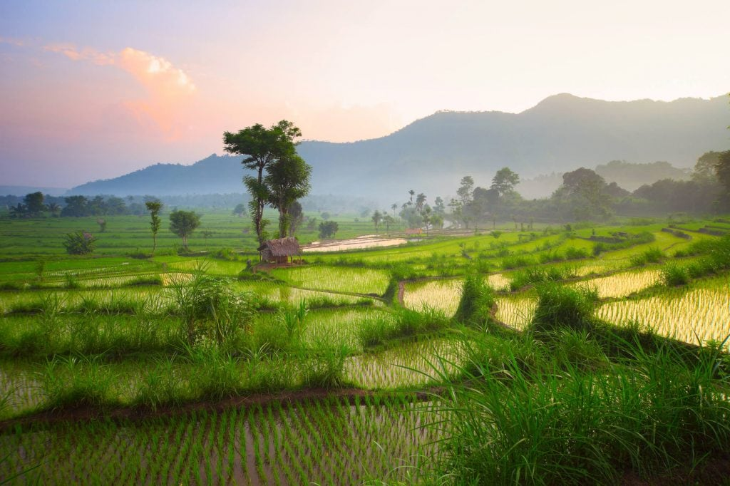 Sunrise over rice fields in Bali - 17 things you need to know before visiting Bali