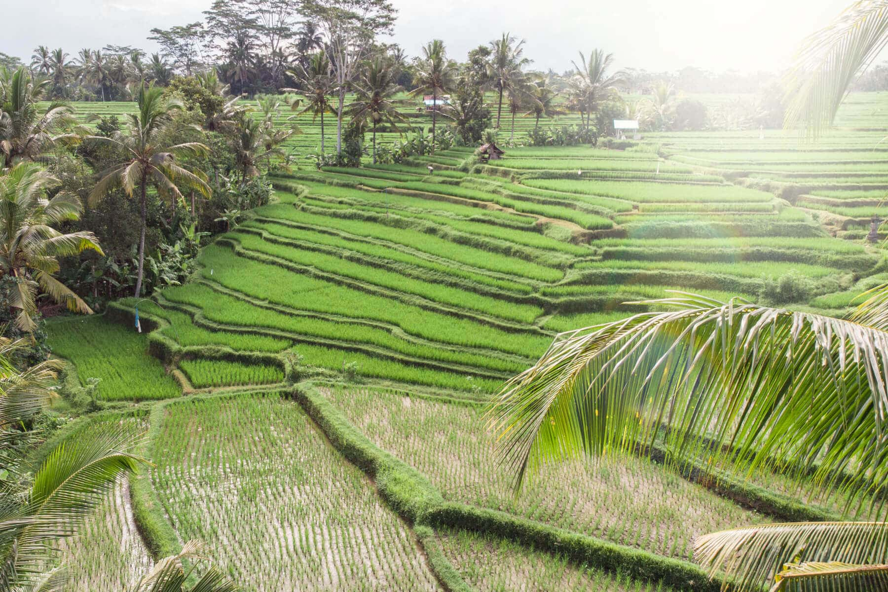Island Life #4 - Our awesome rice field Airbnb in Ubud