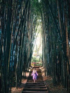 The incredibly stunning Crystal Castle & shambhala Gardens located in the Byron Bay hinterlands - The enchanted bamboo alley