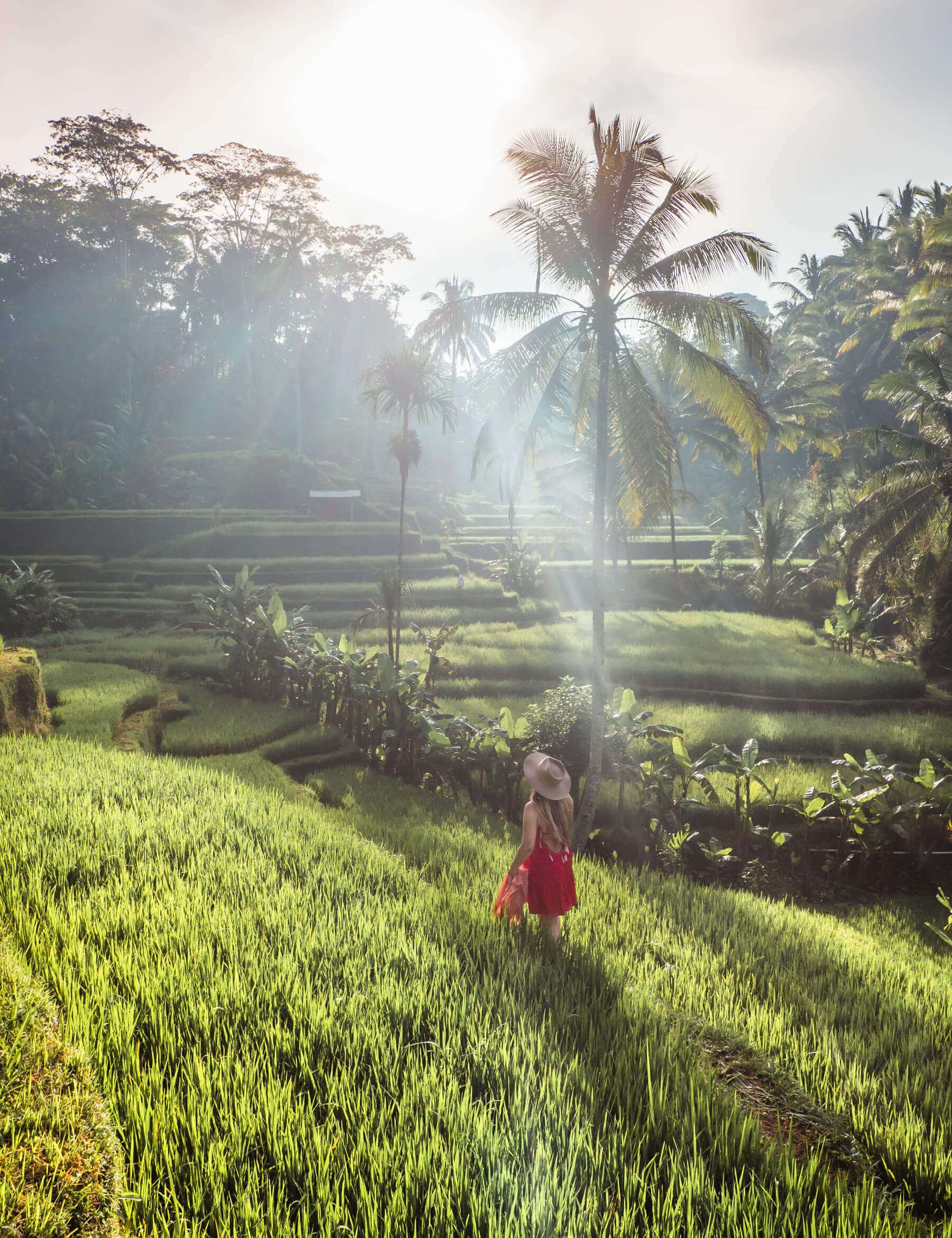 A girl walking through the rice fields in Tegalalang Rice Terrace Ubud at sunrise