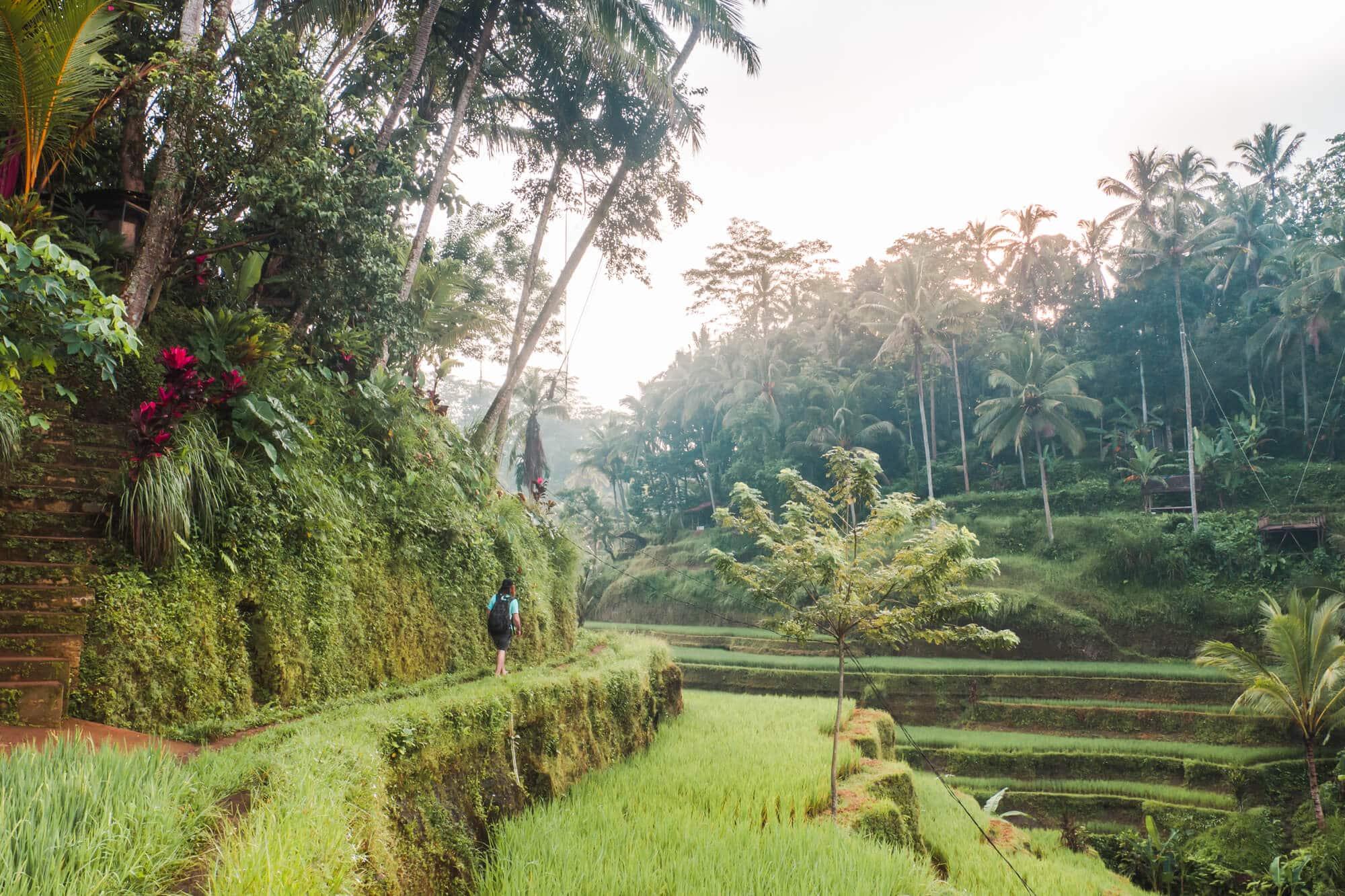 Tegalalang Rice Terrace Ubud swing and sunrise photo location