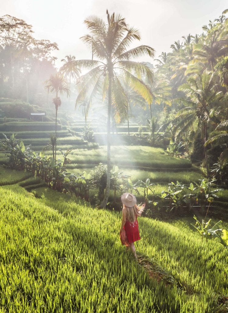 The Instafamous sunrise photography location in Tegalalang Rice Terrace, Ubud