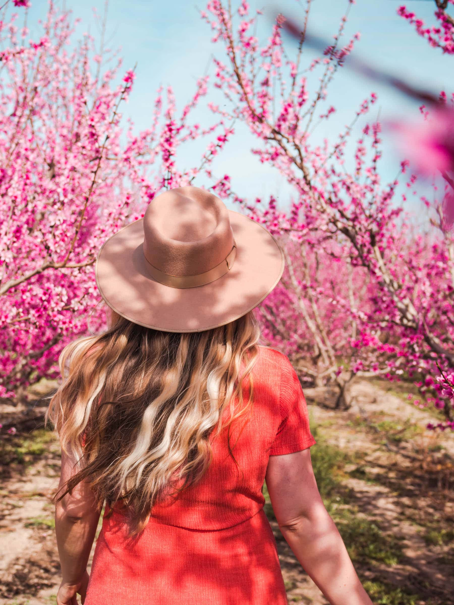 Running in a field of peach tree blossoms in Murcia, Spain - Click through for a complete guide to Floración de Cieza