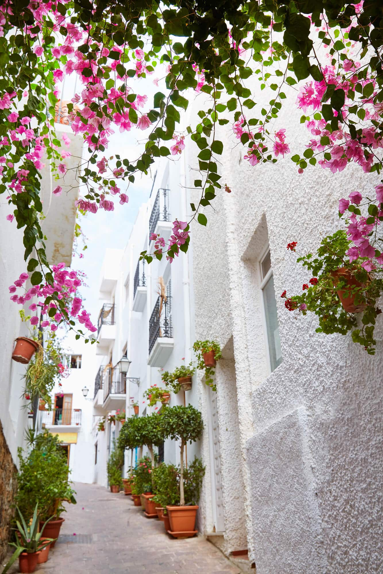 View of a narrow alley between white houses covered in Bougainvillea in Mojácar Pueblo in Almeria - One of Spain's most beautiful white villages