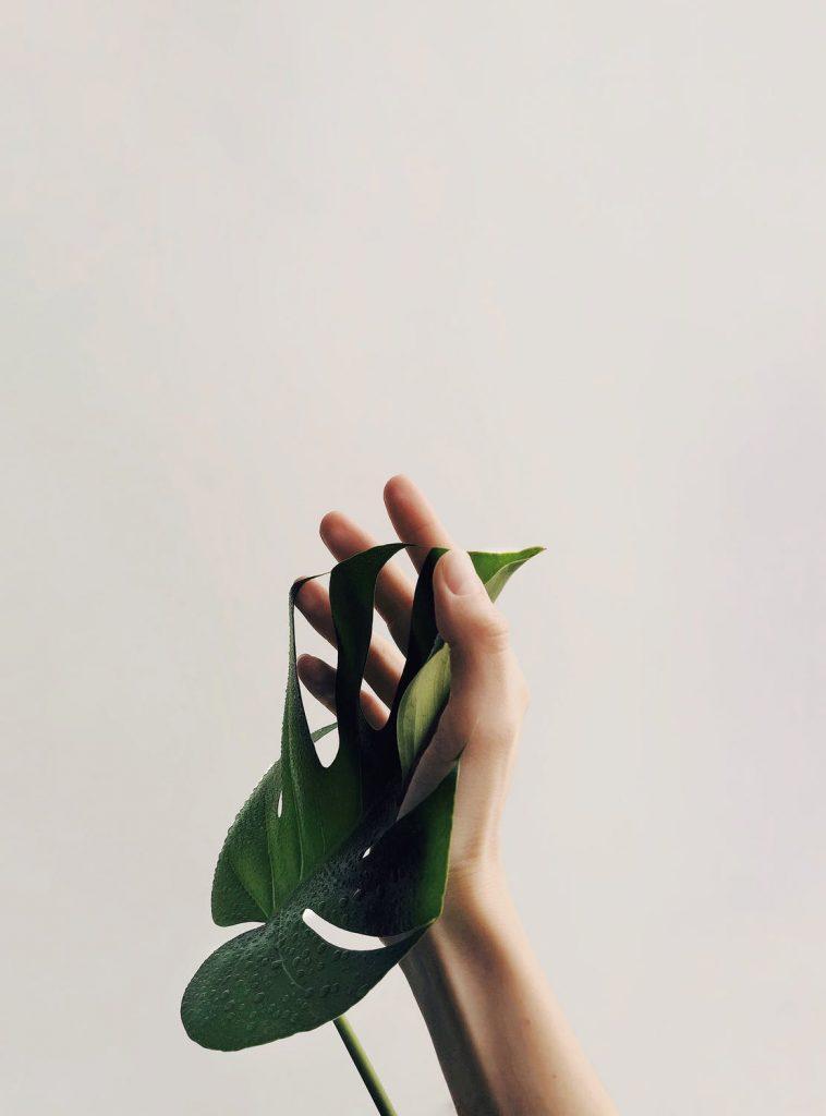hånd og blad