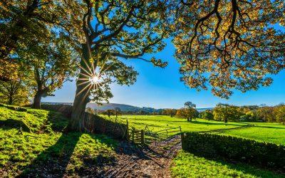 Bor du på landet? Få en forsikring, der passer til dig