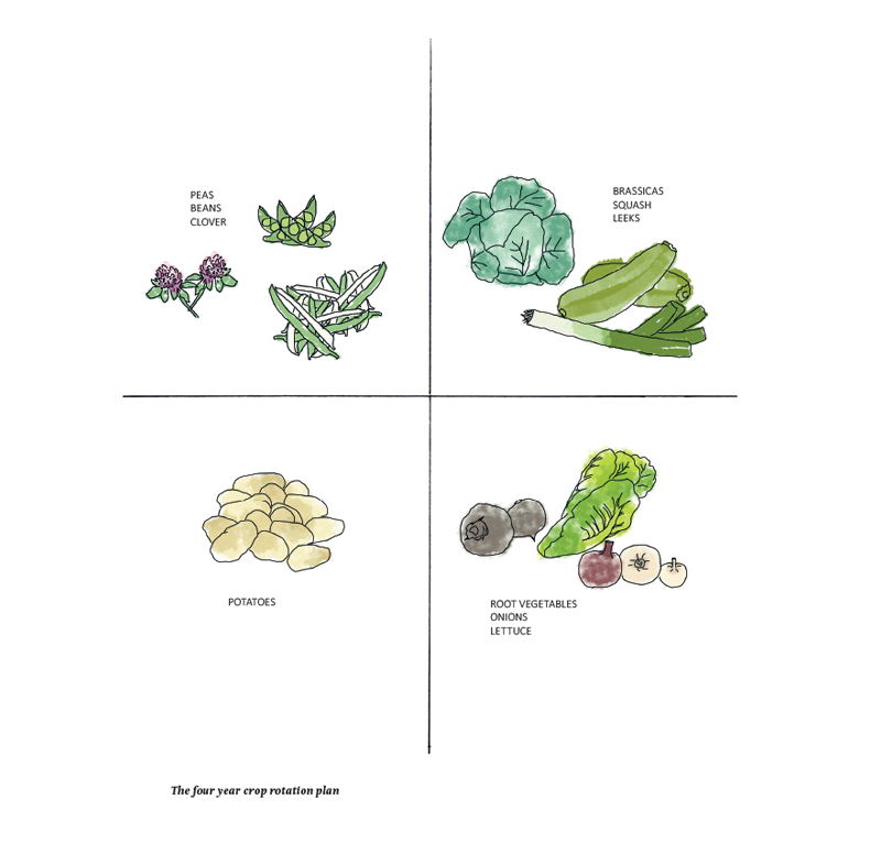 Growing with crop rotation