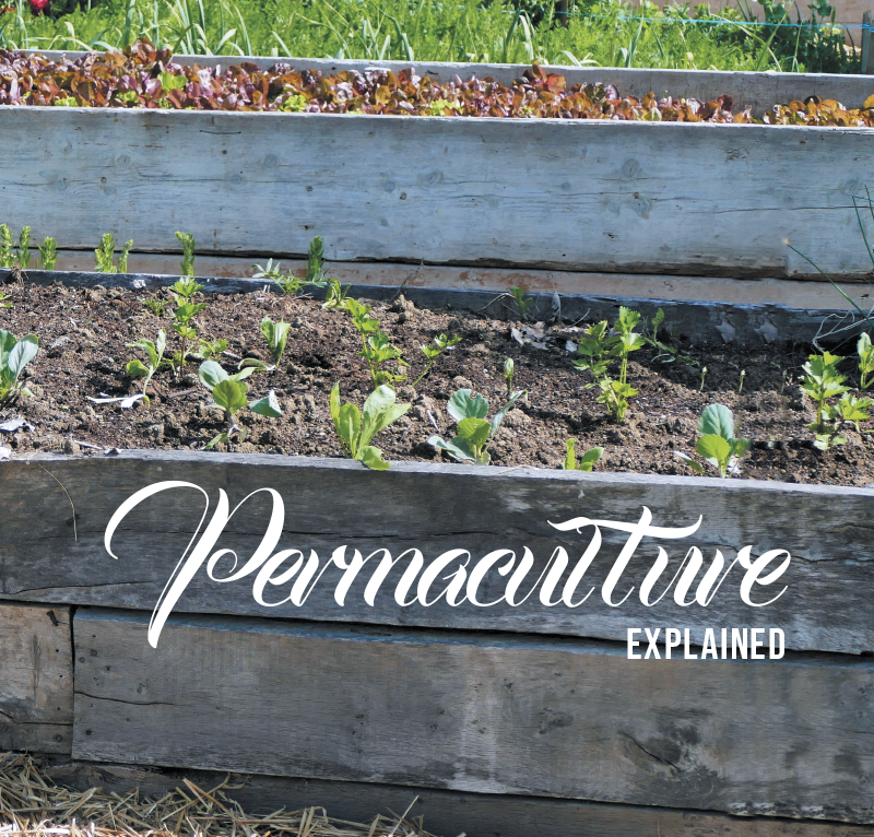How permaculture does work