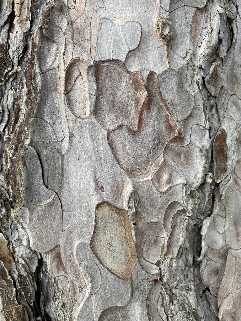 Unique Shapes in Nature