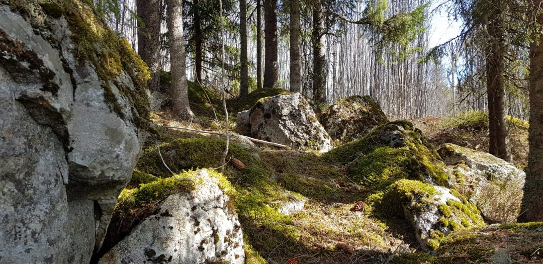 Sommar 2019 – Grundkurs permakultur – Svarttorpet