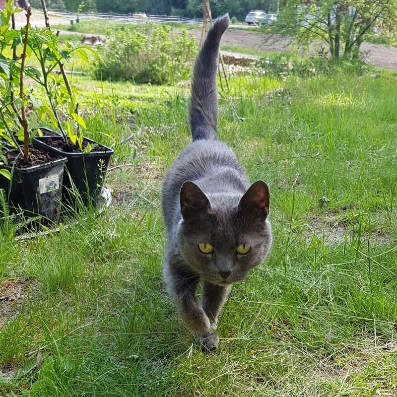Katten blyerts