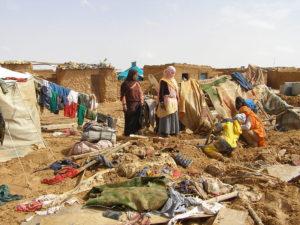 Pressmeddelande, NGO´s går samman för att främja de mänskliga rättigeheterna i Västsaharafrågan
