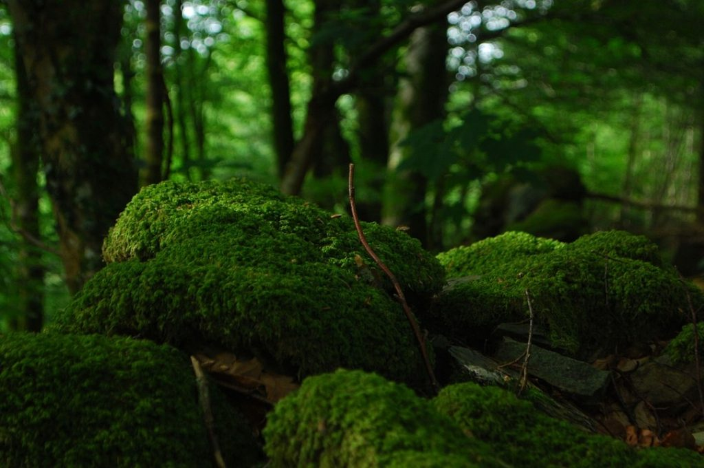 forest-1183524_1280