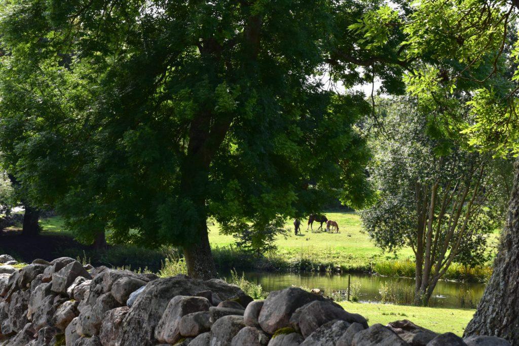 Lehnskov Gods heste på Sydfyn