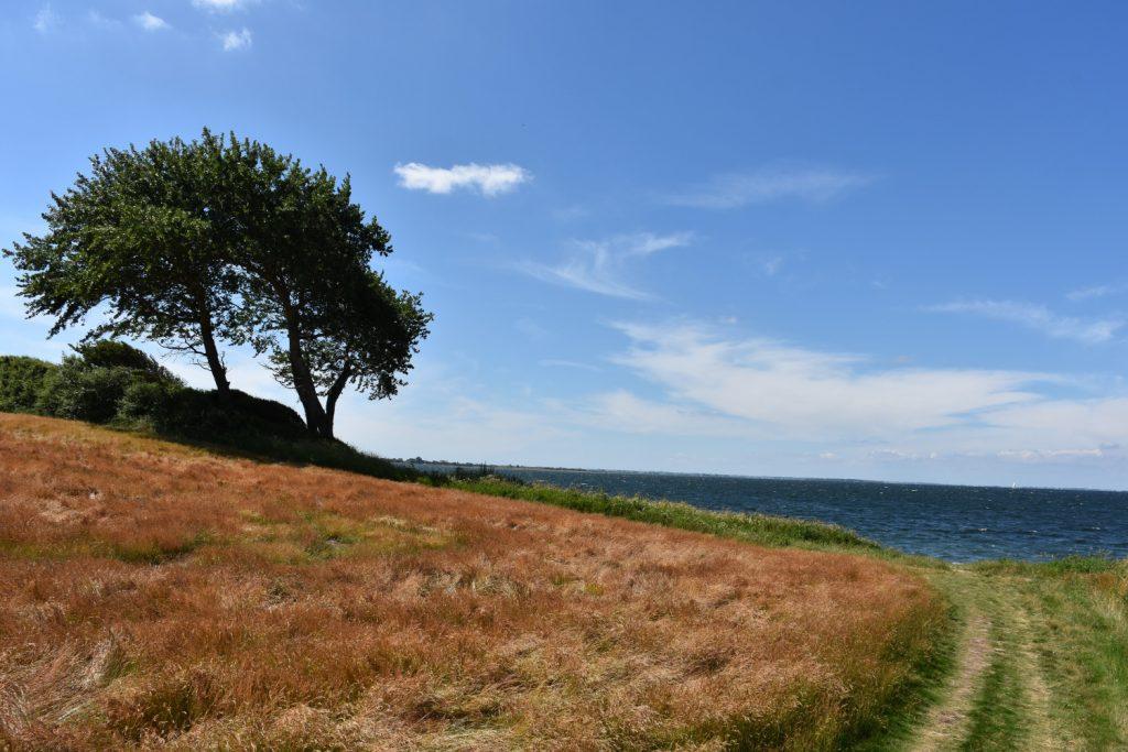 Sti ned til stranden på Sydfyn