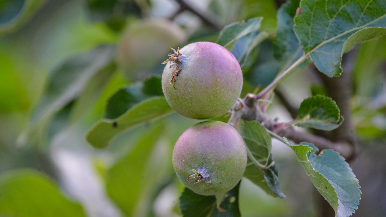 800_5582 Æbler 1600x900
