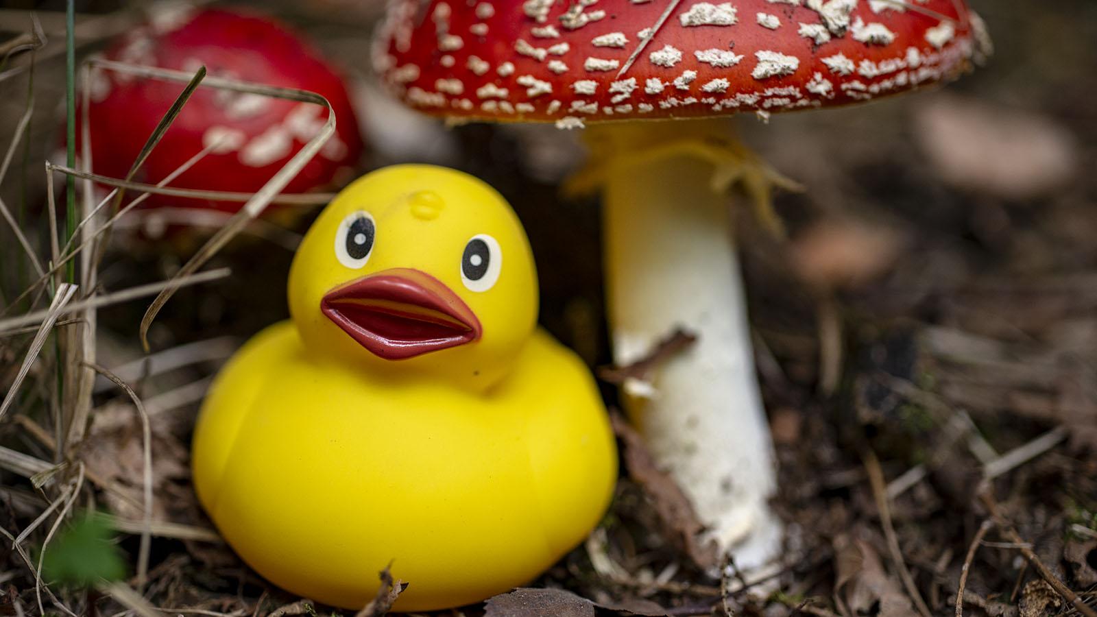 800_7642 Swampo Duck