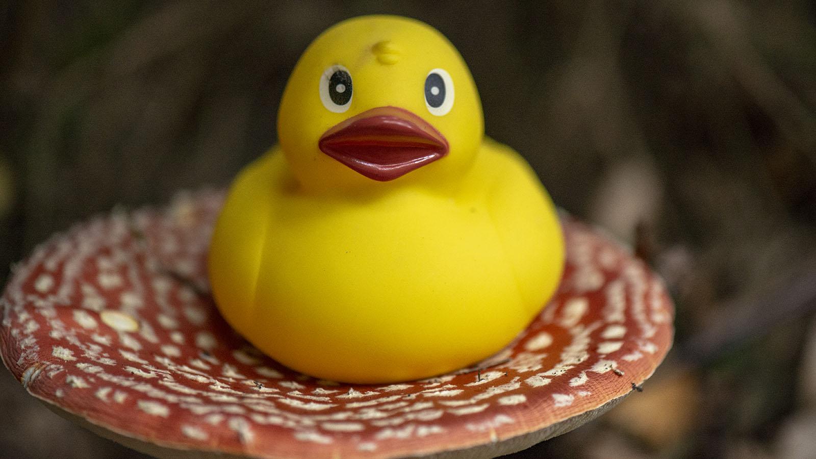 800_7646 Swampo Duck