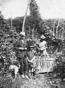 Hop Picking