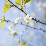 Blommor på träd