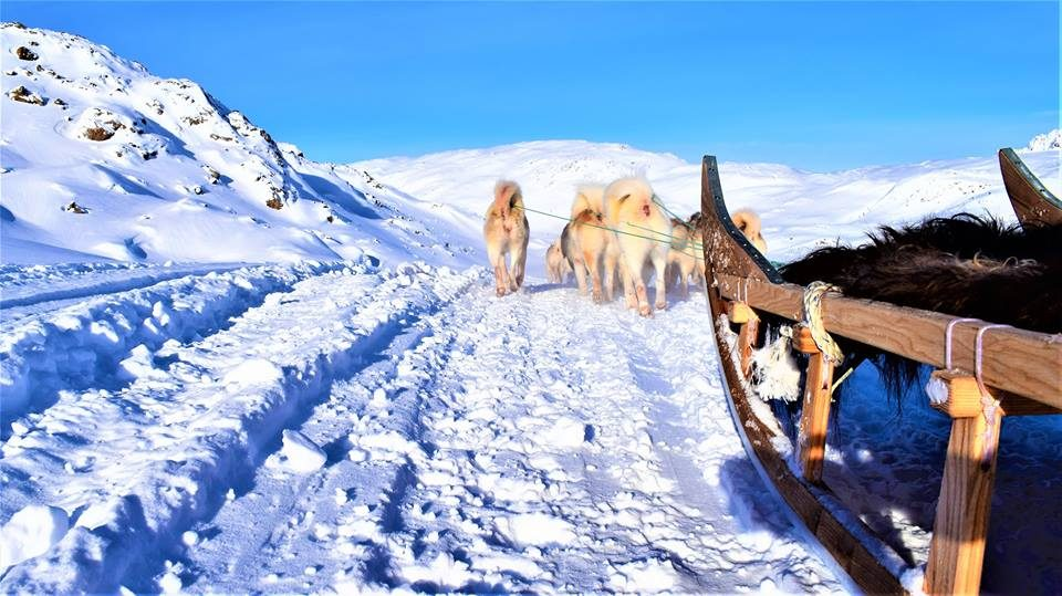 Dog sled view