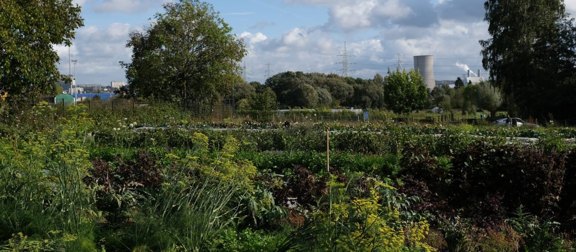 Agro-ecologie-Anderlecht-2