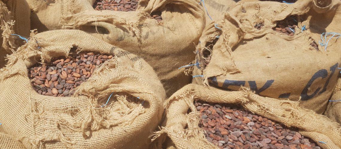 cacao en sac