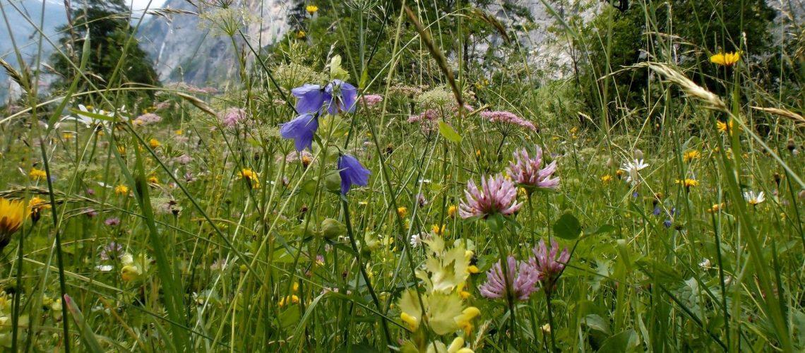 wild flowers_oatsy40