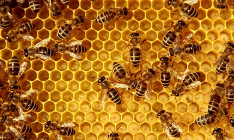 Using artificial intelligence to save bees